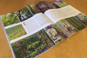 gardenia_interno_articolo