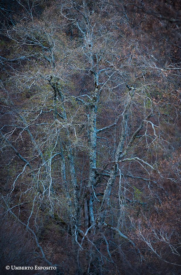 In Aprile nella foresta tutto scorre più veloce. Si è raggiunto il picco di intensità luminosa annuale al di sotto della copertura arborea e approfittando dell'indolenza dei faggi, i fiori del sottobosco si affrettano a riprodursi godendo della disponibilità di luce. Con una continua alternanza tra pioggia e sole, i germogli dei faggi avanzano però con impeto: è il risveglio dal lungo sonno invernale In Aprile nella foresta tutto scorre più veloce. Si è raggiunto il picco di intensità luminosa annuale al di sotto della copertura arborea e approfittando dell'indolenza dei faggi, i fiori del sottobosco si affrettano a riprodursi godendo della disponibilità di luce. Con una continua alternanza tra pioggia e sole, i germogli dei faggi avanzano però con impeto: è il risveglio dal lungo sonno invernale