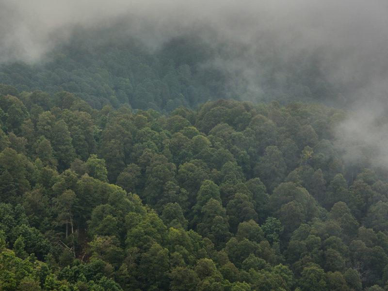 Nuvole basse scorrono sulla canopy di una delle meravigliose foreste vetuste di casa nostra.
