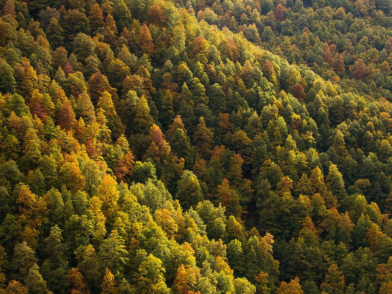 """Uno scorcio della foresta della Val Cervara, dove, possiamo dire, """"tutto"""" è iniziato… L'esame dendrocronologia di questa faggeta condotto dagli scienziati dell'Università della Tuscia ha permesso di determinare l'età di alcuni alberi, in casi eccezionali stimata di oltre 560 anni."""