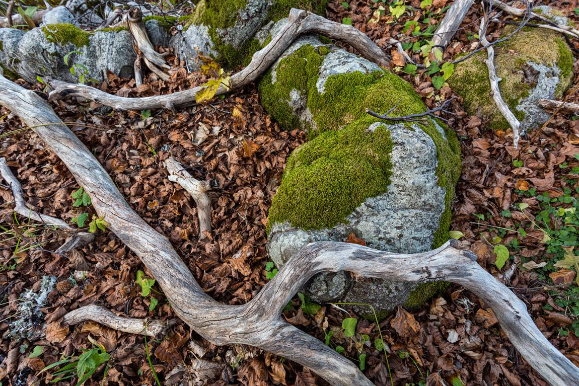 La parte più importante dell'ecosistema forestale si trova sotto i nostri piedi