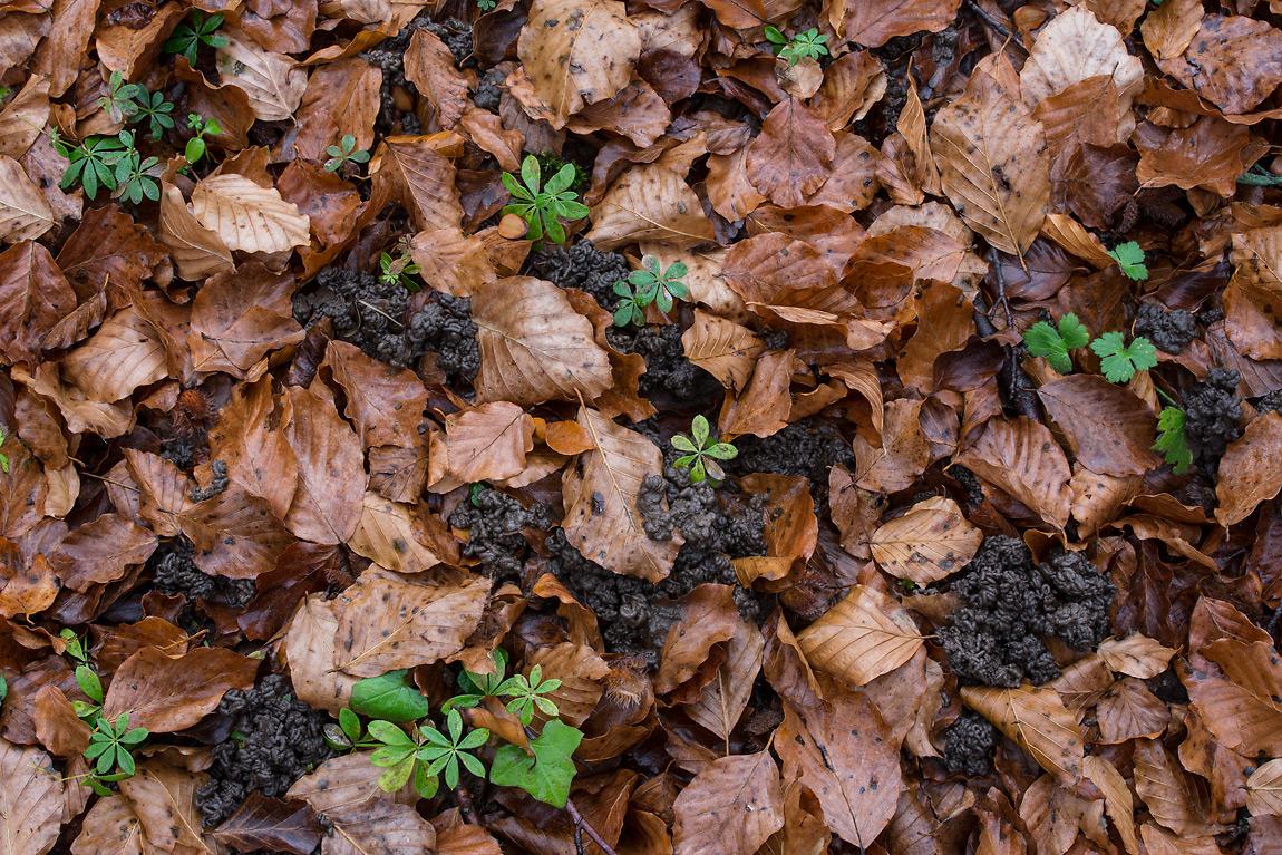 Si nutre di materiale organico di scarto e lo trasforma in escrementi ricchi di elementi che fertilizzano il suolo.