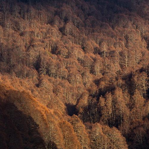 """Coppo del Morto © Bruno D'Amicis - www.silva.pictures  Come ogni settimana, il progetto multimediale """"Il battito della foresta"""" ci porta alla scoperta delle faggete vetuste del PNALM e continuiamo con la presentazione dei cinque siti di foresta selezionati  per il processo di candidatura a Patrimonio Mondiale dell'Umanità UNESCO. Ora è il turno della foresta del """"Coppo del Morto"""", situata nel Comune di Pescasseroli. La luce del tardo autunno, quando le foglie hanno perso qualsiasi pigmento, ci rivela una faggeta di montagna, sviluppata su un pendio molto ripido. Anche in questa località sono stati individuati alberi che superano i cinquecento anni di età. Questi faggi  sono scampati per lungo tempo alla scure dell'uomo poiché fino a pochissimi anni fa il Coppo del Morto era un po' """"terra di nessuno"""", in quanto zona contesa tra i due Comuni di Scanno e  Pescasseroli, e quindi non c'era un'amministrazione di riferimento che autorizzasse i tagli boschivi."""