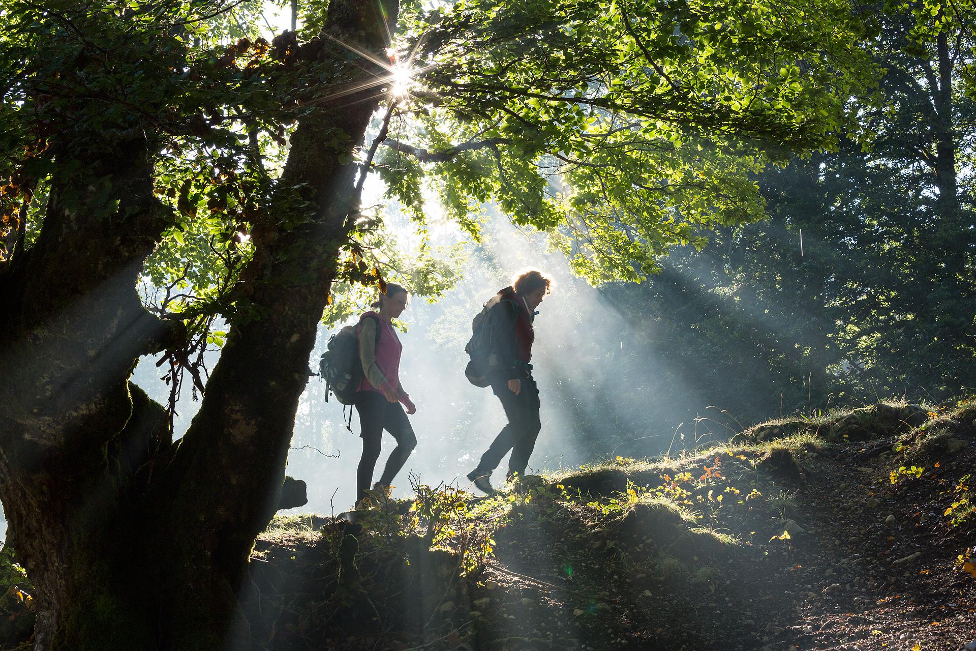 Le foreste sono dei luoghi funzionali per la ricreazione psico-fisica delle persone