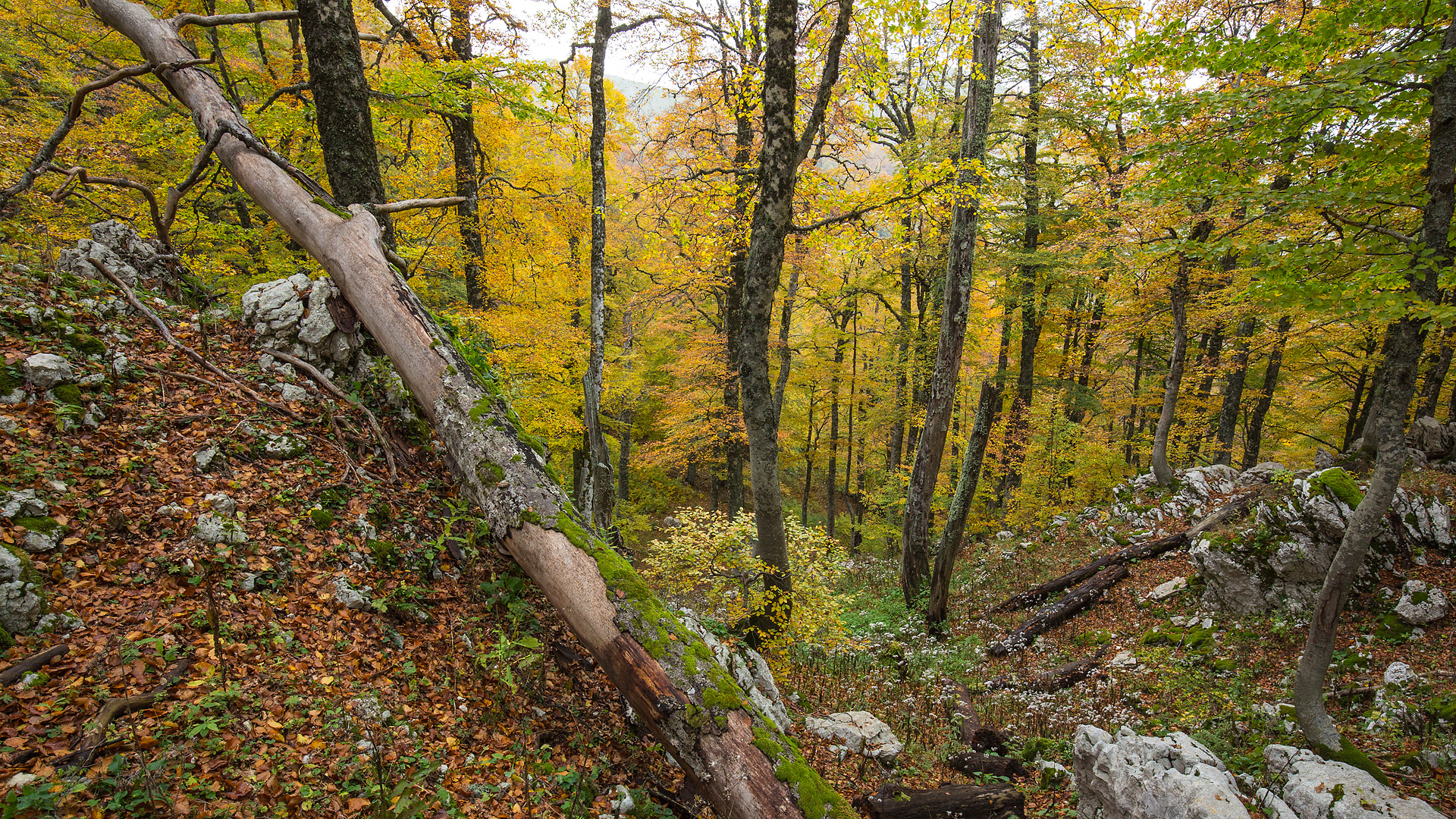 foresta-autunno