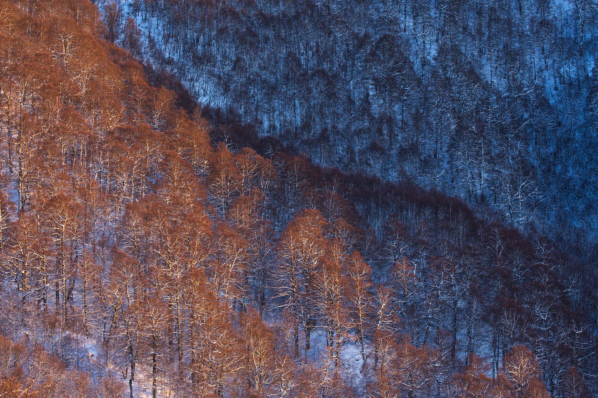 La protezione delle nostre foreste non è solo una scelta dettata da valori puramente scientifici o estetici, ma di fatto essenziale per la nostra stessa sopravvivenza!
