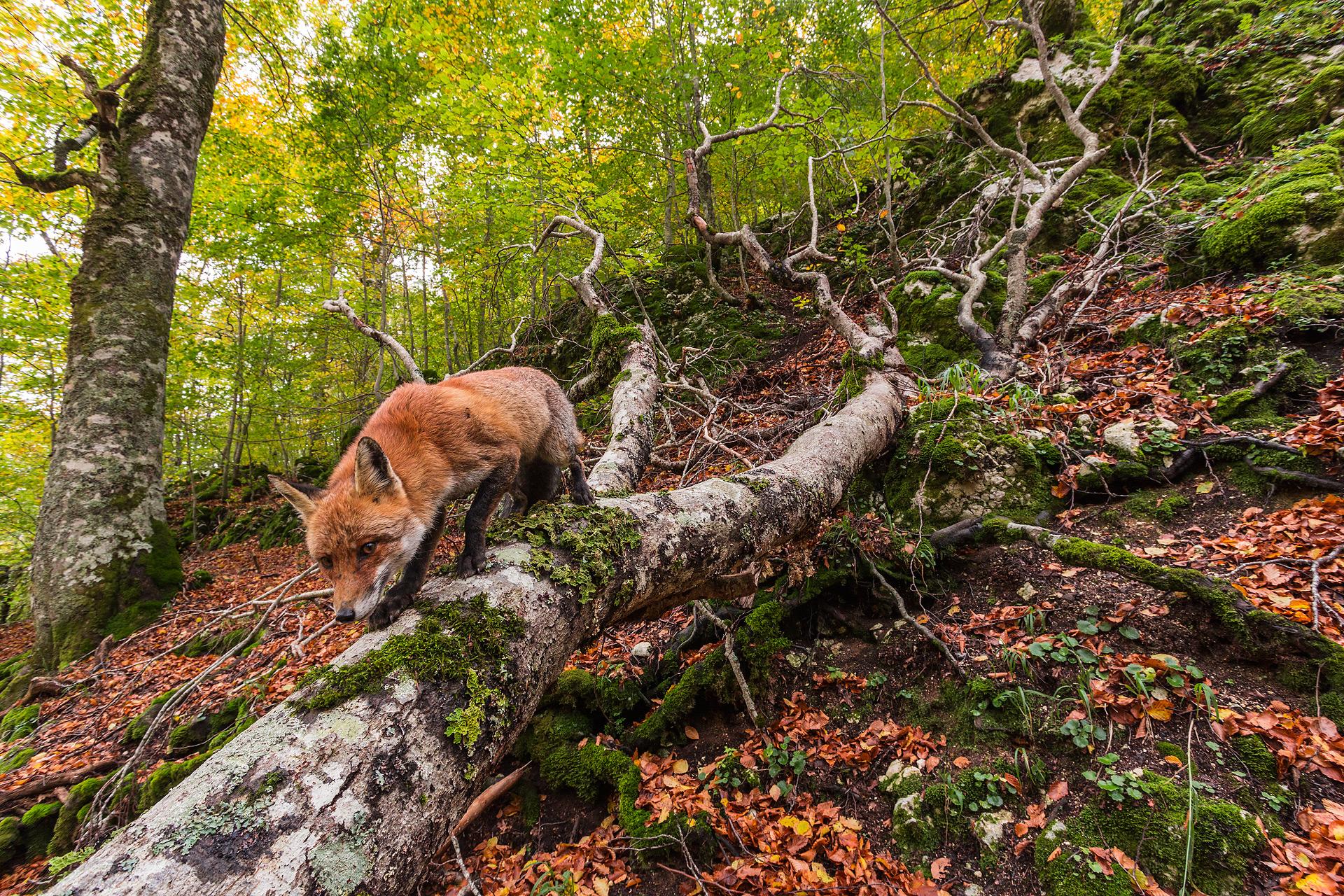 Dovremmo essere custodi rispettosi delle nostre foreste e, invece di cercare a ogni costo di gestirle, forse fare un passo indietro e soffermarci umilmente ad ammirare il trionfo della vita che si rigenera costantemente.