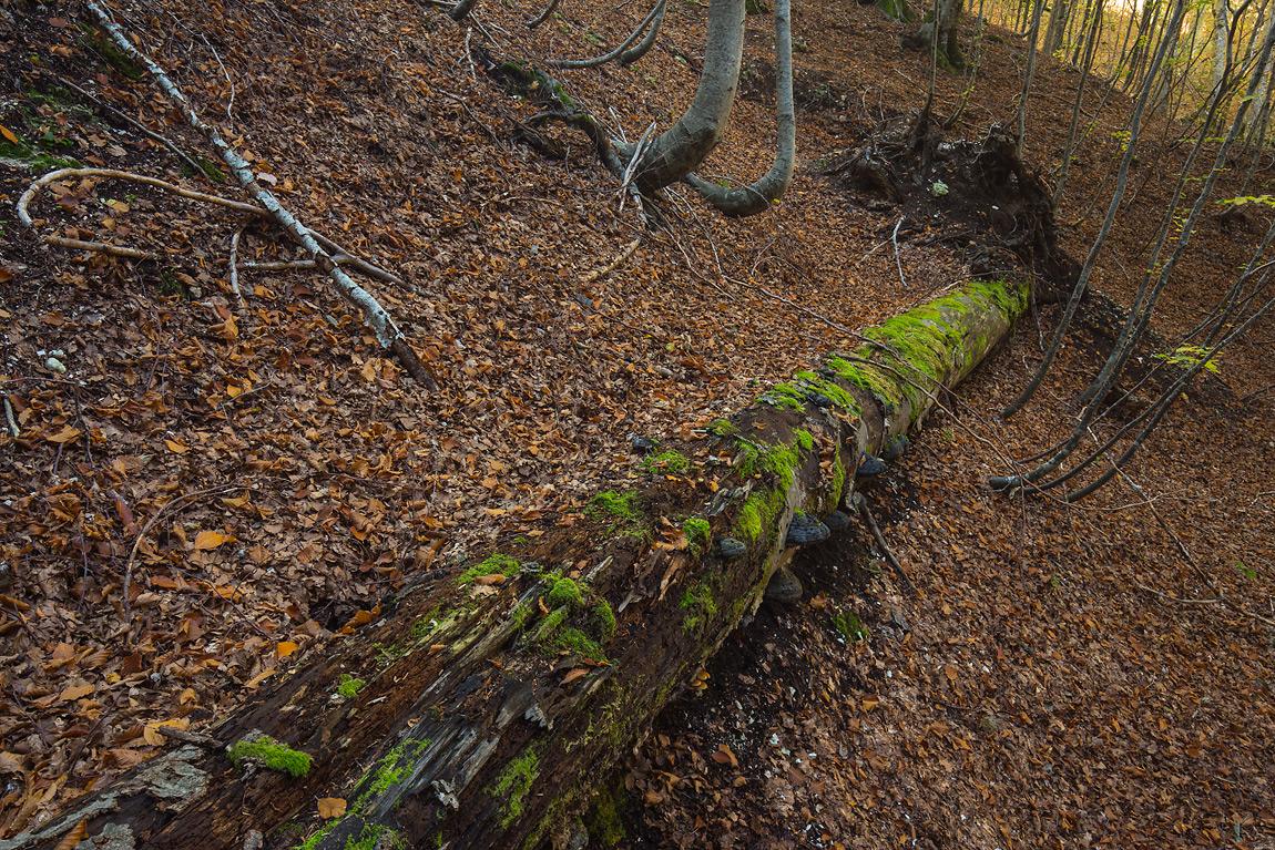 Oltre a essere attori protagonisti nella formazione del suolo gli alberi lo proteggono, riuscendo persino a garantire la stabilità dei versanti montani. Le radici, i ceppi e i tronchi degli alberi morti contribuiscono a trattenere il suolo e prevenirne l'erosione.