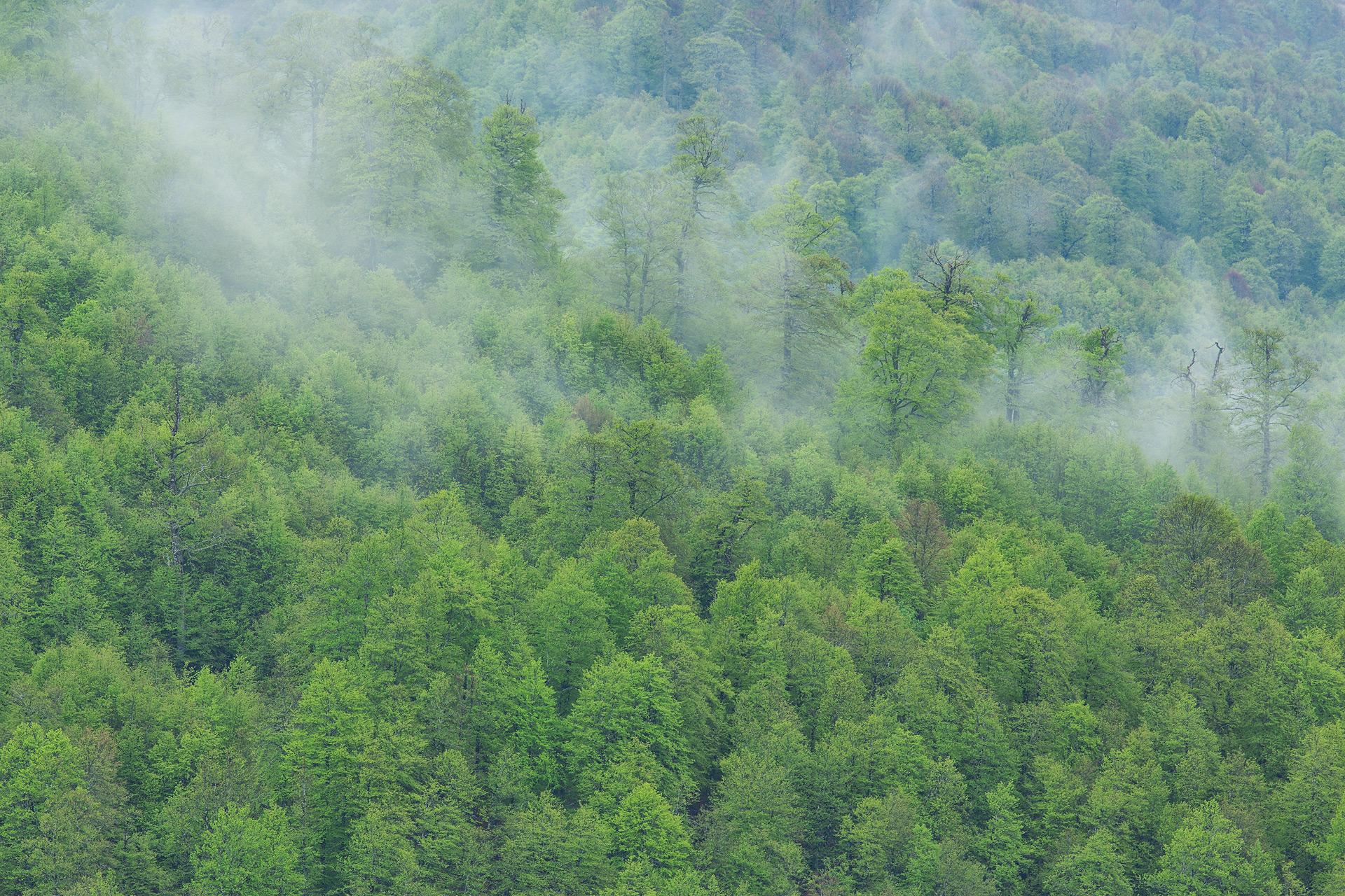 Una grande foresta può influenzare il ciclo dell'acqua e, quindi, la sua disponibilità in una certa regione