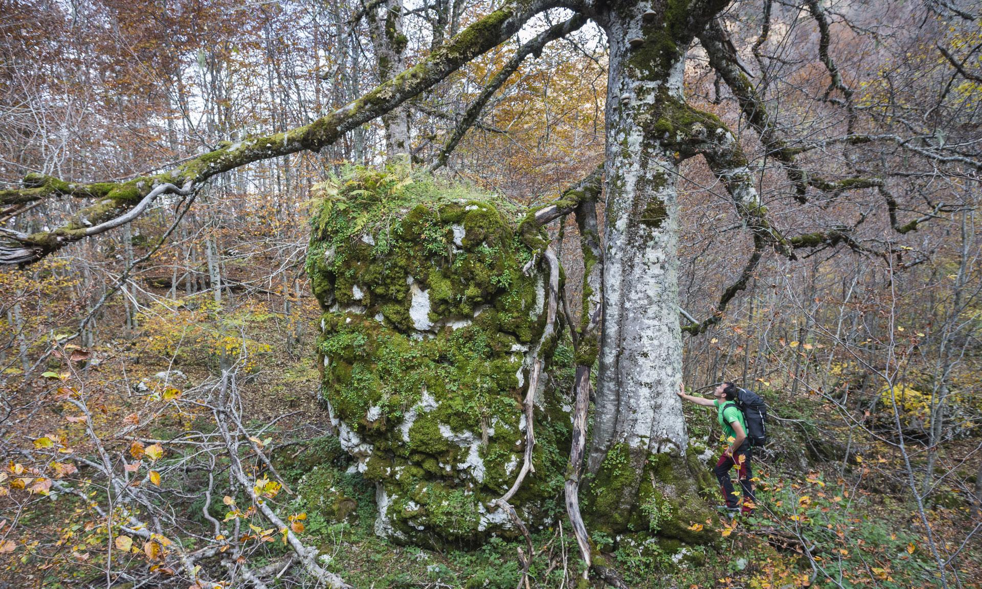 Sono passati in tutto cinquecento anni, siamo arrivati ai giorni nostri e in un pomeriggio di tarda estate un'escursionista accaldato si riposa all'ombra di questo albero maestoso